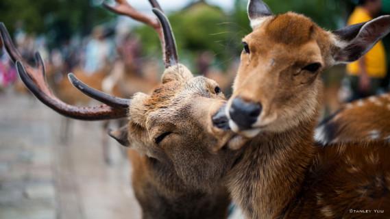28 Foto che Provano che i Baci Non Sono Solo per le Persone