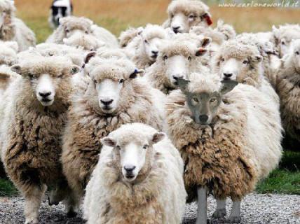 Trova l'Intruso: 20 Cose o Persone che si Trovano nel Posto Sbagliato!