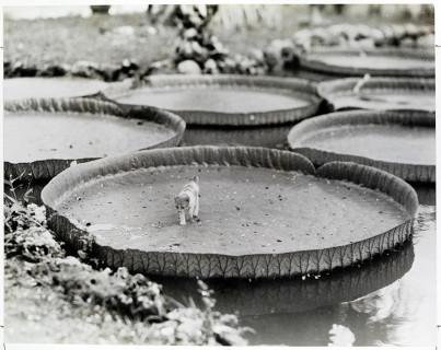 25 Inedite Foto Mai Pubblicate Trovate negli Archivi del National Geographic