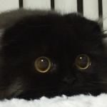 Gimo, Ecco il Gatto con gli Occhi Più Grandi del Mondo in 16 Buffi Scatti!