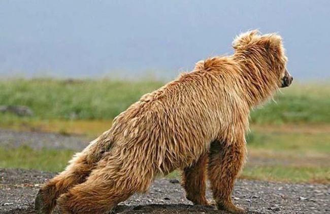 Tutt'altro che Pigri! Ecco 20 Animali che Sanno Come Mantenersi in Forma