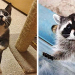 20 Buffe Espressioni degli Animali che vi Implorano per un Po' di Pappa!