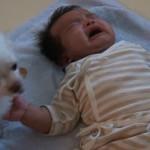 Il Cagnolino Daizu Cerca di Consolare il Bebè in Lacrime: Ecco Cosa Fa...