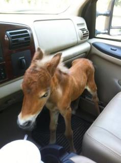 Provate a Resistere a Questi 19 Cuccioli di Cavallo che vi Scioglieranno il Cuore
