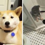 20 Gatti Dispettosi che Hanno la Meglio sui Cani