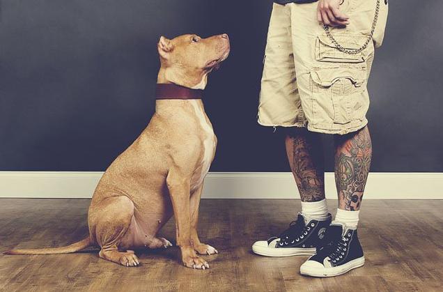 """Tattoos & Rescues: Cos'Hanno in Comune Cani di Razze """"Pericolose"""" e Uomini Tatuati?"""
