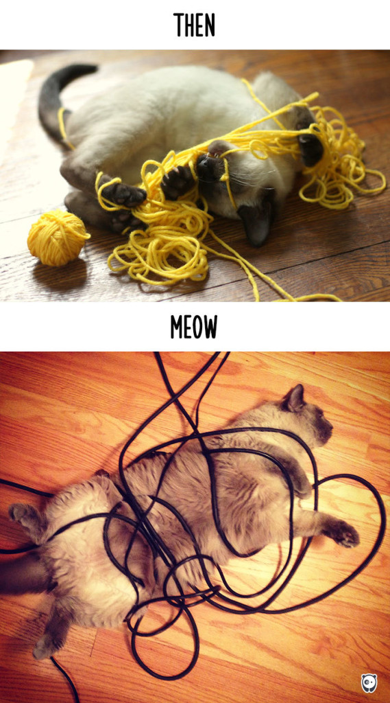 14 Foto che Dimostrano Com'è Cambiata la Vita dei Gatti con la Tecnologia