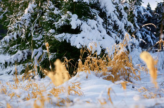 Riuscite a Trovare Chi è Nascosto nella Natura In Queste 24 Foto?