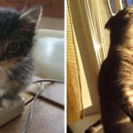 30 Foto di Gatti che Amano il Caldo più di Qualsiasi Altra Cosa