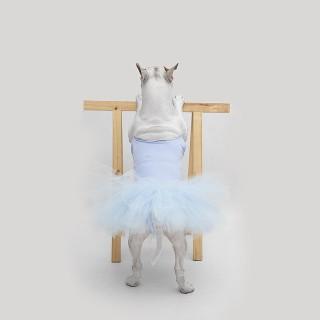 La Moglie lo Lascia e Lui Trova l'Ispirazione: Ecco 30 Illustrazioni di un Buffissimo Bull Terrier