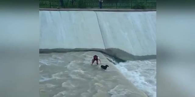 Il Cane cade Nel Fiume: Ecco Cosa ha Fatto questo Gruppo di Amici