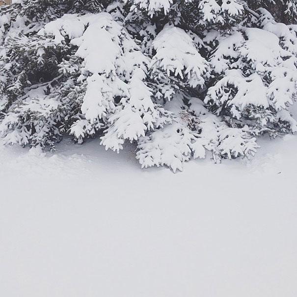 In quante di queste 14 immagini riesci a trovare Momo, il cane che gioca a nascondino?