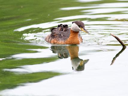 Mamme con le ali: 28 immagini meravigliose dell'amore materno nel mondo animale