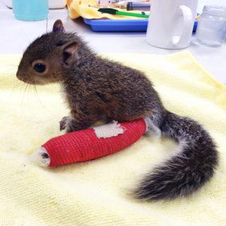 Vita da veterinario: 20 animali dolcissimi salvati e fotografati con le loro fasciature