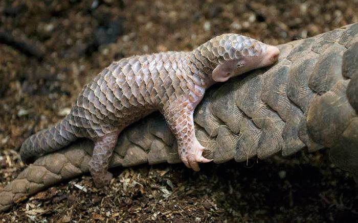 Questo dolcissimo animale esiste davvero? Ecco chi è!