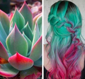Succulent hair: le 10 idee più belle del nuovo trend capelli Instagram