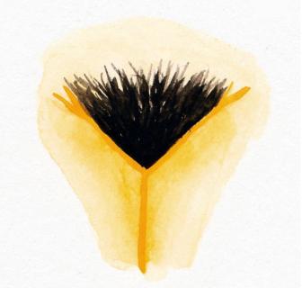 Il profilo Instagram delle vulve per celebrare la diversità delle donne