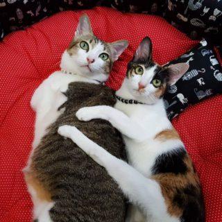 Non si è meno gatti con due zampe in meno