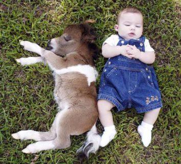 15 immagini di cani (no!), gatti (no!)... cavallini domestici