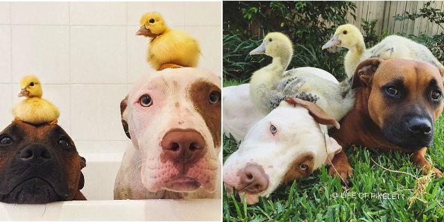Il prima e il dopo di animali cresciuti insieme