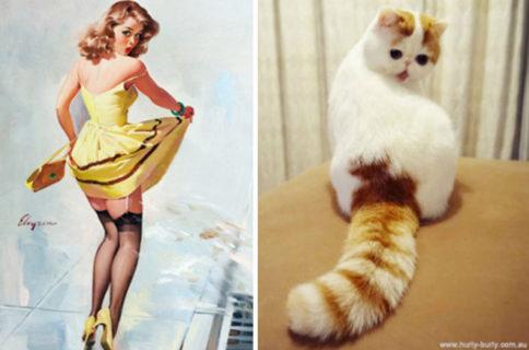 Questi gatti posano come delle vere Pin-up