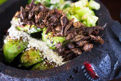 Come ti cucino gli insetti. 24 piatti considerati gourmet (altro che schifo!)