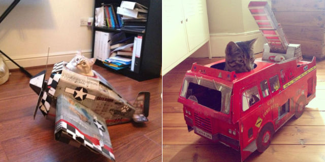 I giocattoli per gatti più originali (e assurdi) mai visti