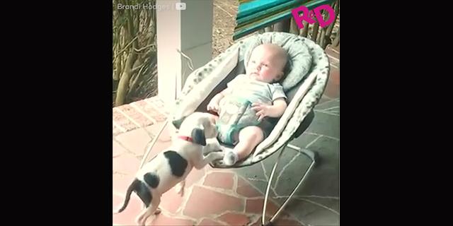 """Due """"cuccioli"""" a confronto"""