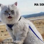 Gandalf: il gatto che fa vacanze migliori delle tue!