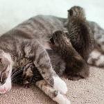 Le gioie (e i disagi) di essere una mamma... Gatto