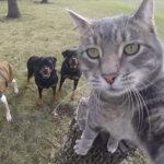 Manny: il gatto campione di selfie