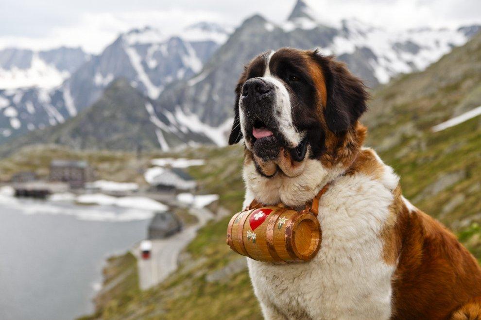 Le 10 razze di cani che scappano più spesso: c'è anche il tuo?