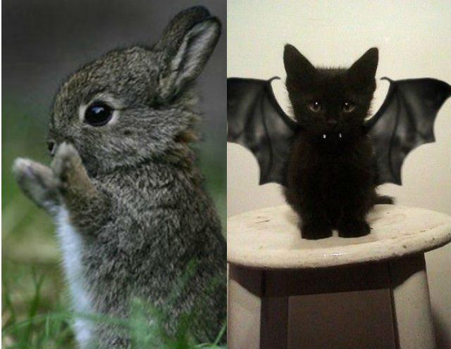 Conigliare vs gattare: 8 motivi per scegliere un coniglio invece di un gatto