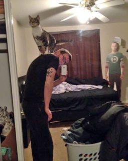"""40 immagini di persone che avevano detto """"in questa casa non entra nessun gatto"""""""