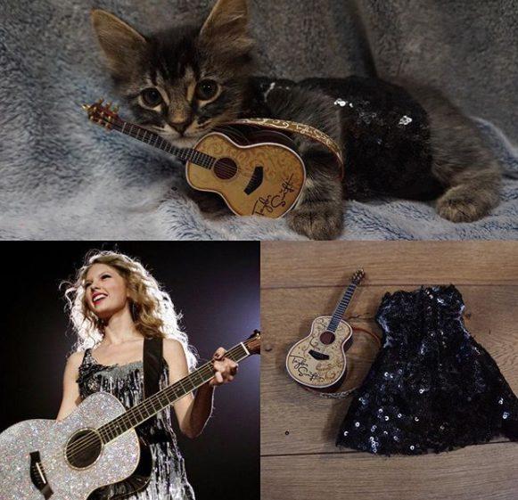 Come Taylor Swift: i gattini indossano gli outfit della star