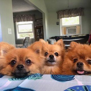 La vita tragicomica di chi vive con più di 3 animali in 50 immagini