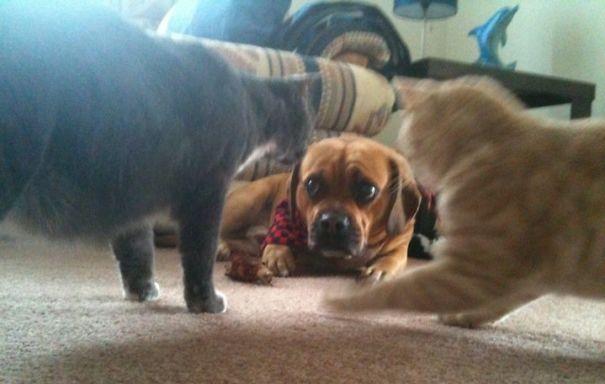 40 casi in cui la convivenza tra cani e gatti non va come previsto