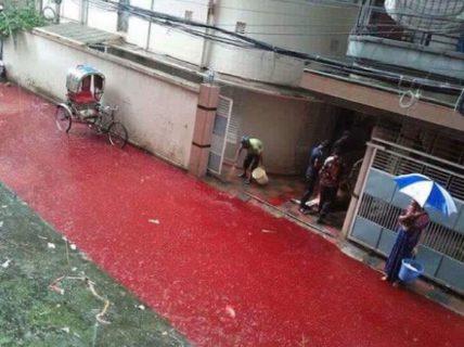 La bambina nel fiume di sangue e altre foto vere delle Festa del Sacrificio