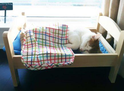 IKEA lancia una linea di mobili per cani e gatti