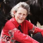"""Temple Grandin, la donna autistica che si costruì la """"macchina degli abbracci"""""""