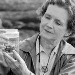 """La """"profezia"""" di Rachel Carson, che ci aveva avvertiti della Primavera Silenziosa"""