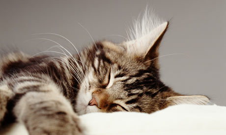 A-sleeping-pet-cat-001