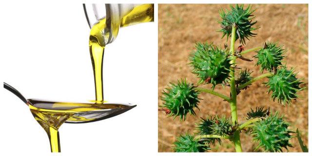 Olio di ricino per capelli, ciglia e sopracciglia: benefici e modi d'uso