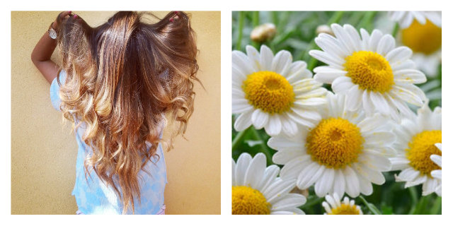 schiarire i capelli con la camomilla da quale colore partire