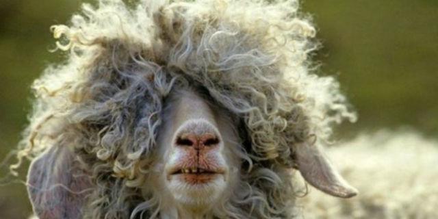 Come asciugare i capelli ricci: tutti i segreti per ottenere ottimi risultati