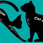 Cat Line: come questi gatti possono regalarti un trucco occhi perfetto
