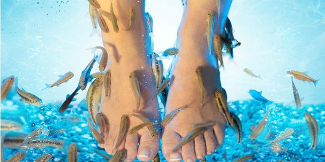 Fish pedicure con i pesci Garra Rufa: benefici e controindicazioni
