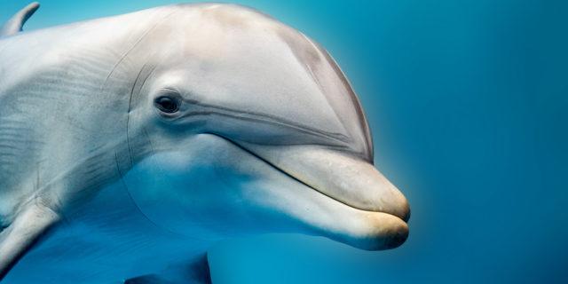 Dolphin skin: il beauty trend delle star per una pelle... Da delfino