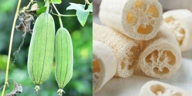 Spugna di luffa: cos'è e come utilizzarla per esfoliare la pelle